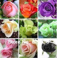 (THIS ORDER INCLUDE 24PACKS EACH COLOR 20 SEEDS)24KIND CHINESE ROSE SEEDS  POT PLANT GARDEN BONSAI FLOWER SEED DIY HOME PLANT