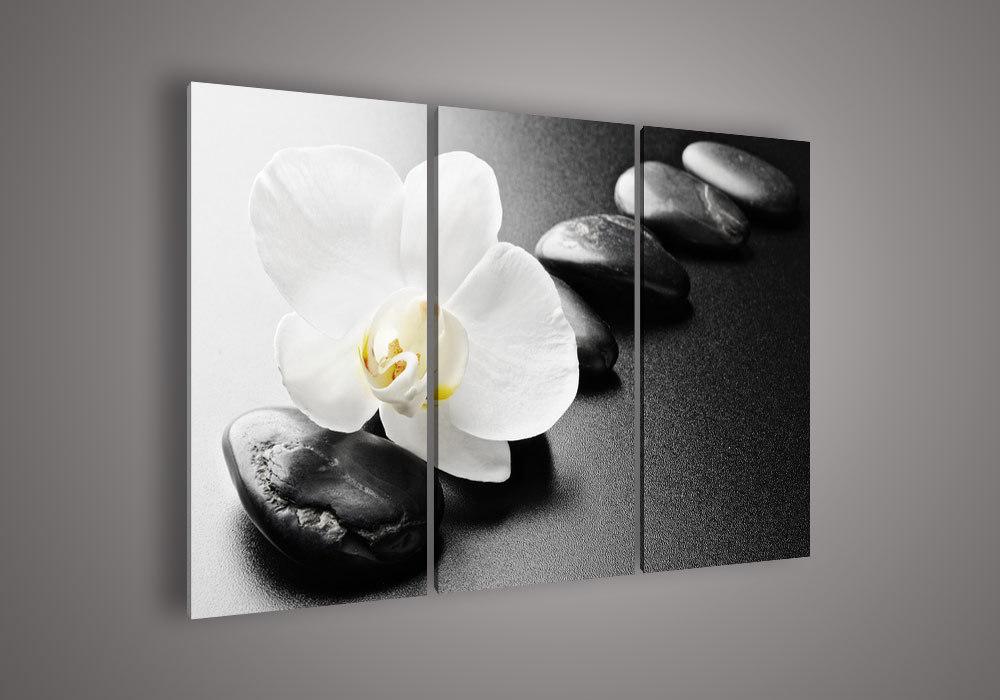 Flower Frame Black And White Flower Black Amp And White