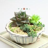 Fleshier plant flower pot colored glaze ceramic bonsai plants meat flower pot 12cm pallet set