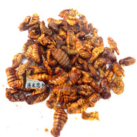 Free shipping Dried silkworm chrysalis silkworm pupa powder pupal fishing bait fish bird feed bird food 500