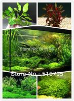 10kinds Fish tank plants seeds Aquarium Plant Ornament seed,mixed package 10g about 1000pcs hydroponics plant