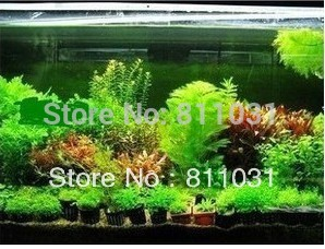 Hot selling 300pcs aquarium grass seeds (mix) water aquatic plant seeds (15 kinds) family easy plant seeds free shipping(China (Mainland))