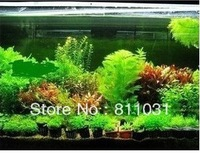 Hot selling 300pcs aquarium grass seeds (mix) water aquatic plant seeds (15 kinds) family easy plant seeds free shipping