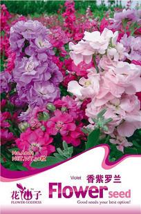 Hot selling Verbena hybrida seeds 150pcs flower bonsai plant DIY home garden free shipping(China (Mainland))