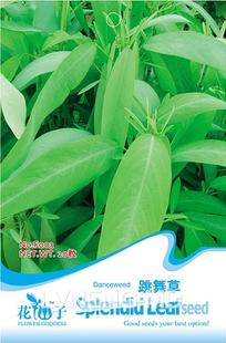 Hot selling Dancing grass bonsai seeds automatic 100pcs DIY home garden free shipping(China (Mainland))