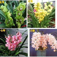 100pcs * Selected high-quality Orchid Seeds 16 different kinds blended-color seeds bonsai flower seeds*Free shipping