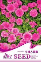 Dwarf Pink Aster Seeds /1 Pack 50 Seeds Callistephus Allistephus Garden Flower A203
