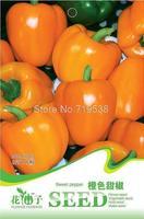 Orange Sweet Pepper Seeds Capsicum Organic Vegetable Hot C063 1 Pack 8 Seed