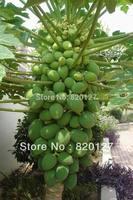 100 Seeds Fresh Chinese Carica Papaya Pawpaw Sweet Fruit Seeds