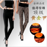 Free  new 2013 winter woman's warm leggings, high waist fashion Waistguard  pants woman legging thicken velvet leopard  BT102