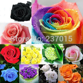 500pcs Colorful Rose Seeds Blue Red Purple Pink Black Rainbow Petal Plants Home Garden Flowers Bonsai