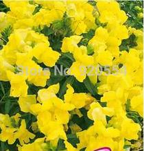 snapdragon flower price