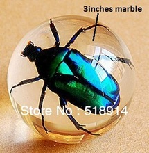 Real Green Chafer Beetle in Clear Resin Ball,Insect Specimen Bug Sphere,so Cool Boy Gift,60mm Diameter(China (Mainland))