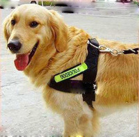 Dog collar Big dog harness large dog / working dog fluorescent Chest Set + rope Nylon pet collar