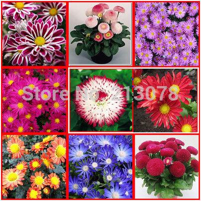 100Pc Pink Four Leaf Lover Clover Flower Bonsai Indoor Grass Seeds Go Garden Hot Sale