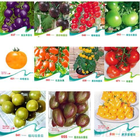 TOMATO SEEDS Purple Cherokee Cherry Black Red Yellow Blue Zebra Tomato Fruit Vegetable Bonsai Food 1NWT(China (Mainland))