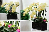 High quality artificial flowers real touch latex phalaenopsis moth orchids table flowers silk flower free shipping