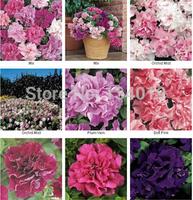 100 pcs / bag, Petunia Seeds, DIY flower planting, garden Petunia,Mixed color