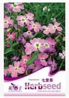 free shipping Herba blumeae citriodorate seeds vanilla flower bag seeds - 50 seeds