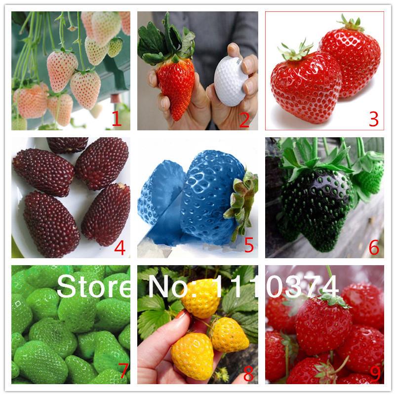 Promoci n de frutilla blanca compra frutilla blanca - Semillas de frutas y verduras ...