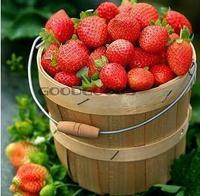 250pcs/lot free shipping climbing strawberry seeds  Vegetable seeds bonsai Vegetable seeds bonsai edible strawberry four seasons