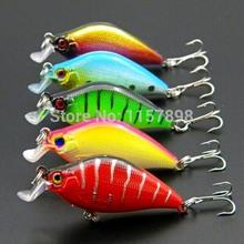 carp bait price