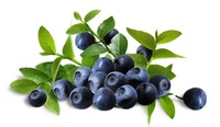 Free shipping 1pcs/lot(30seed) hot selling blueberry fruit seeds for DIY home garden!