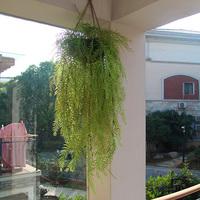 For 2 pcs Plastic flower artificial grass anthoxanthin  artificial flowers and plants wedding decoration flores artificiales
