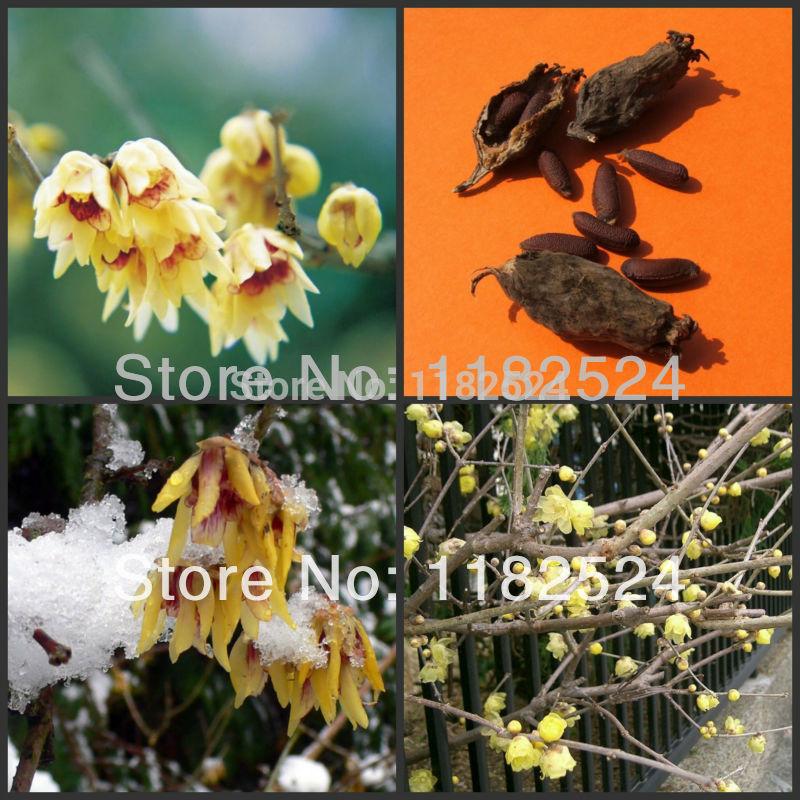 Winter Flowering Plants Winter Flower Plant Tree