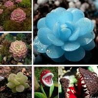 New 2014 Radiation-resistant mini bonsai flowers plant garden plant seeds health and stone flowers