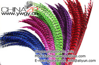 Factory Wholesale 80-90cm/lot Dyed ZEBRA Lady Amherst Pheasant Tail Super Long Feathers