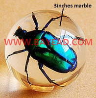 Real Green Chafer Beetle Resin Ball Marble,Insect Specimen Bug Sphere,TAXIDERMY GIFT,Boy Gift,Birthday Present 60mm Diameter