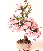 Hot selling 20pcs sakura seeds bonsai flower easy to plant DIY home garden free shipping