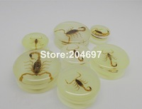 14pcs Big Size 18-30mm Glow In The Dark Amber Scorpion Acrylic Double Flared Saddle Ear Plug Ear Tunnel Body Piercing Jewelry