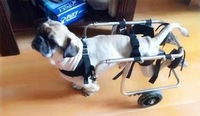 Dog Wheelchairs Customized  Pet Wheelchair for Paralyzed Dog Pet Limb Rehabilitation Training Car Dog Scooter