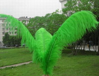 Wholesale 100PCS Green quality natural ostrich feathers 10-12 'inche