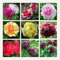 Flower pots planters 36 kinds  Mixed Peony seeds Home Graden Bonsai  flower plants sementes 100pcs