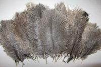 """100pcs/lot! The Nature Grey-Brown colour Ostrich Feathers 6-8""""15-20cm,the true colour Ostrich Feathers  FREESHIPPING"""
