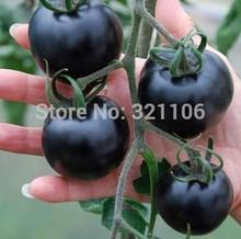 "100 Healthful  ""Indigo Rose"" Darkest tomato Seeds"