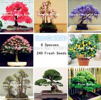 Bonsai seeds 8 packs Bonsai Tree Seeds Pine,maple bonsai,Sakura,DIY Home Garden,Free shipping