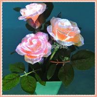 Mini Fibre Flower Rose with Light