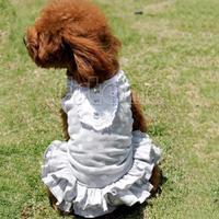 D19   Colorful Cute Dog Pet Tutu Dress Lace Skirt Cat Princess Clothes