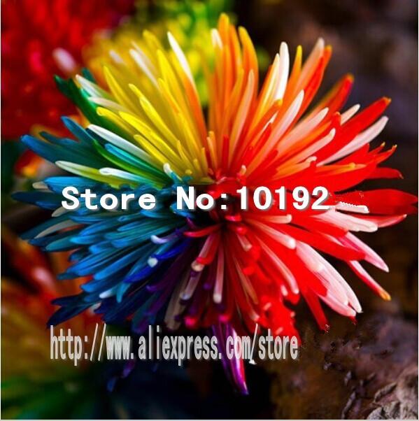 купить Карликовое дерево Linda 100 ,  GFD3698385 недорого