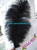 "wholesale 100pcs/lot 12-14""  Black Ostrich Feather Plume FREE SHIPPING"
