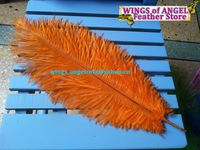 "wholesale 100pcs/lot 12-14"" Orange Ostrich Feather Plume FREE SHIPPING"