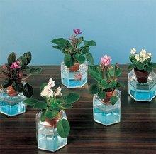 20pcs embalagem cor misturada / pack Sementes de flores ** Africano Violeta Fantasia sementes passados , Frete grátis por CPAM(China (Mainland))