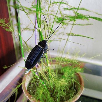 1Pcs/lot Solar Power Energy Black Cockroach Bug Toy  #3710