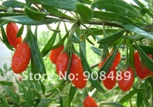 Chinese Medlar 1000g Dried goji berry Wolfberry Health product Ningxia natural food