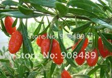 Wolfberry 1000g Medlar Goji berry Himalaya Chinese Medlar Health ninxia goji Health food