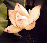 FREE SHIPPING 20 SEEDS Weak Lin Yellow Lotus Flower Seeds Gorgeous Aquatic  Label: Lotus21